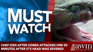 Chef Dies After Cobra Attacked Him 20 Minutes After It's Head Was Severed - Video