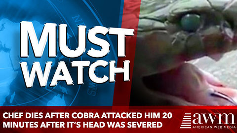 Chef Dies After Cobra Attacked Him 20 Minutes After It's Head Was Severed