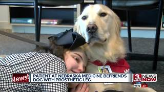 Cancer patient becomes befriends dog with prosthetic leg - Video