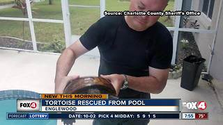 Tortoise rescued from pool in Englewood home - Video