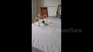 Budgie shows off incredible football skills - Video