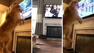 Barking mad! Hilarious moment dog jumps for joy at Royal Wedding - Video