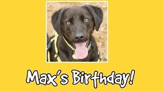 Rescue Dog Celebrates Birthday With Trip to Pet Store and Special Party
