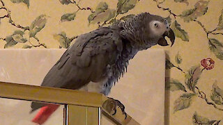 Hospitable parrot offers an interesting lunch invitation