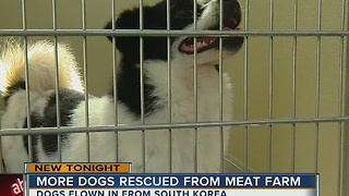 Dog rescued from meat farm - Video
