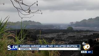 Farmers harvest what they can after volcanic eruption - Video