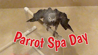 Spoiled Parrot Gets Pampered With Deluxe Spa Treatment - Video