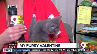 More than 800 animals at My Furry Valentine at Sharonville Convention Center - Video