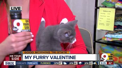 More than 800 animals at My Furry Valentine at Sharonville Convention Center