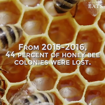 Are You Sure Your Honey From The Grocery Store Is Real Honey?
