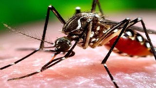 WORLD'S DEADLIEST ANIMAL! 8 gross facts about mosquitoes - ABC15 Digital