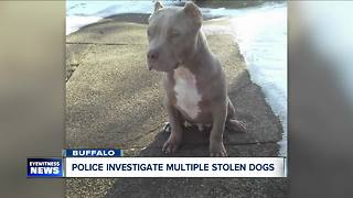 Family searches for dog stolen from their yard - Video