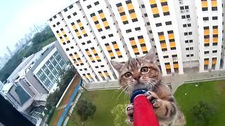 Helpless kitten on a ledge saved by rescue officer - Video