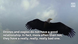 Eagle Has Enough Of Drone - Video
