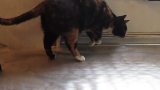 Plastic Mat Shocks A Jumping Cat - Video