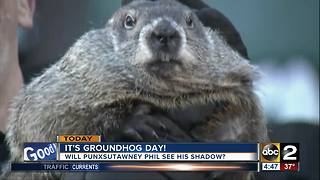 Friday is Groundhog Day! - Video