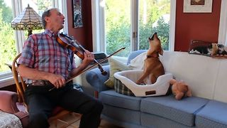 Fiddle Loving Dog Howls Along - Video