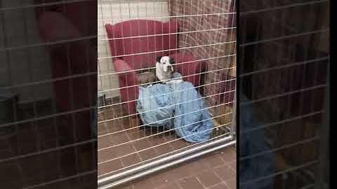 Illinois Community Donates Sofas For Homeless Dogs