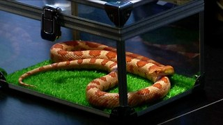 Japanese Snake Cafe - Video
