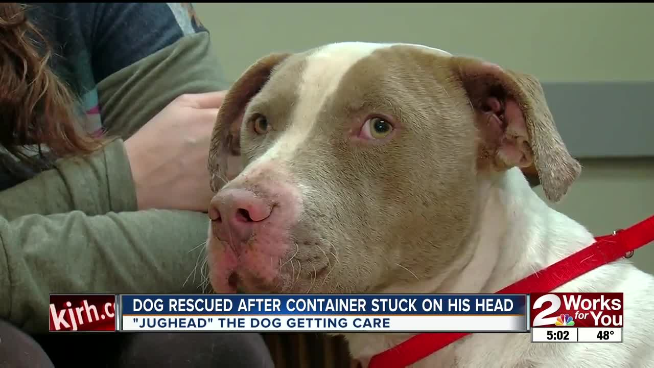 Dog Rescued After Container Stuck on His Head
