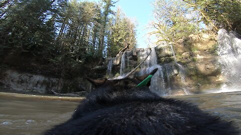Hiking dog with attached GoPro plays fetch in secret waterfall