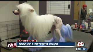 Angie's List: Pet groomers offer trims, color treatments - Video