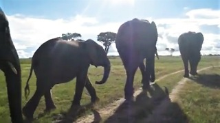 Walking With Elephants In Zimbabwe Is A Magical Experience - Video
