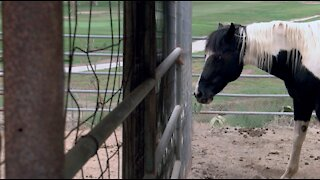 Rescue horse ranch burned in Valley Fire