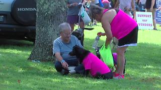 Dogfest: Baltimore Humane Society biggest dog day of the year - Video
