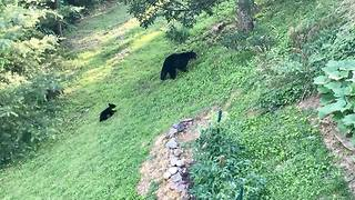 Bears Visit Tennessee Home for the Second Time - Video