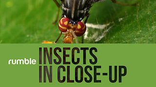Mesmerizing Close-Up Compilation Of Various Insects In Ecuador