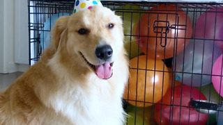 Adorable puppy birthday celebration