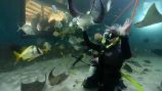 Aquarium Encounters of a Different Kind - Video