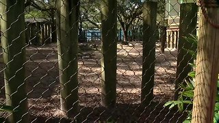 How ZooTampa ensures accidents like children falling into a rhino enclosure don't happen