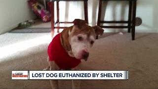 Lost dog euthanized by shelter - Video