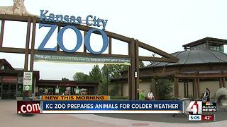 KC Zoo prepares animals, exhibits for winter - Video