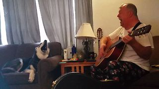 Howling Husky Sings Along With Owner Playing The Guitar