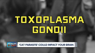 Cat Parasite could impact your brain