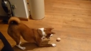 Dog Is Terribly Confused By One Hard Boiled Egg