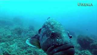 Video Shows Glimpse of the Medes Islands Marine Reserve - Video