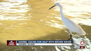 Sanibel asking for help with brown murky water