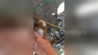 Locals rescue cute puppy which was stuck under ground - Video