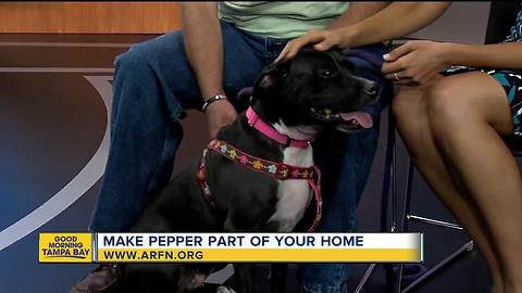 Rescues in Action June17 | Make Pepper part of your family