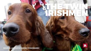 Dogs in the St. Paddy's Day spirit | Rare Animals - Video