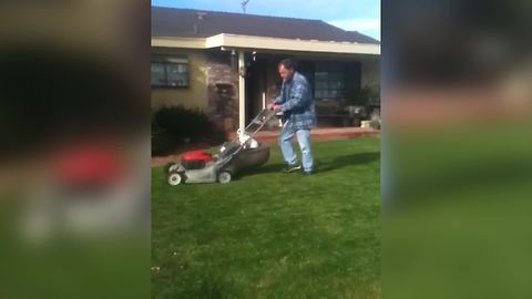 Funny Dog Rides On A Lawn Mower