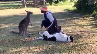 This cute kangaroo thinks he's a dog