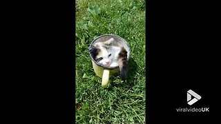 Cup of kitty || Viral Video UK - Video