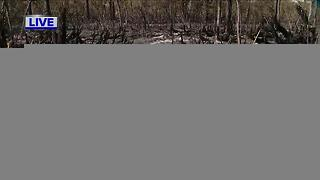 Polk Co. brush fire 75% contained - Video