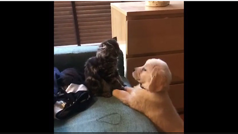 Puppy & kitten boxing match set to 'Rocky' theme song