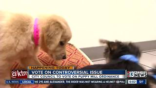 Decision pending on pet store ordinance - Video